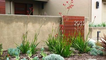 red flowered kangaroo paw plant- also comes in yellow