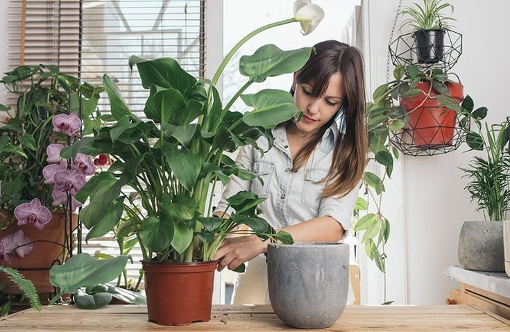 The Best Bathroom Plants According To Green Thumbs 400 x 300