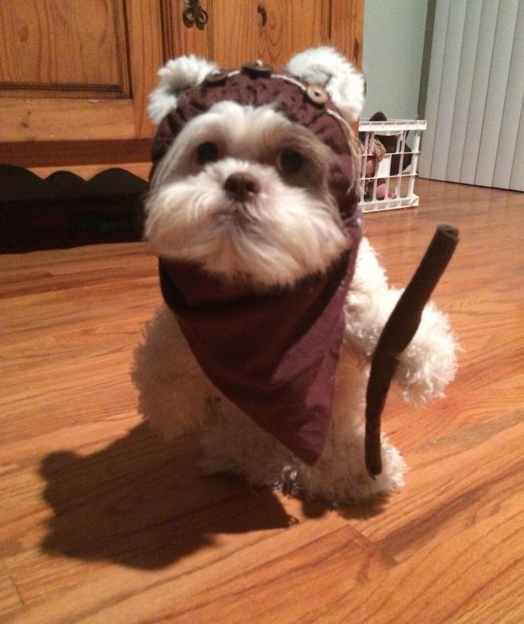 Ewok dog costume I made for my Shih-Tzu.....Inspired by: http://makezine.com/2014/11/09/how-to-make-a-walking-teddy-bear-costume-for-your-dog/