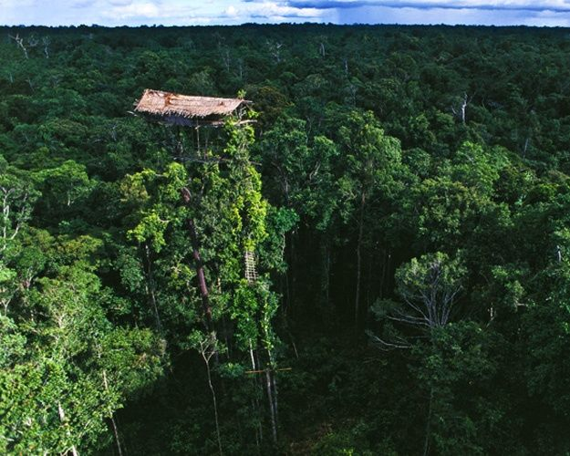 PNG Treehouse