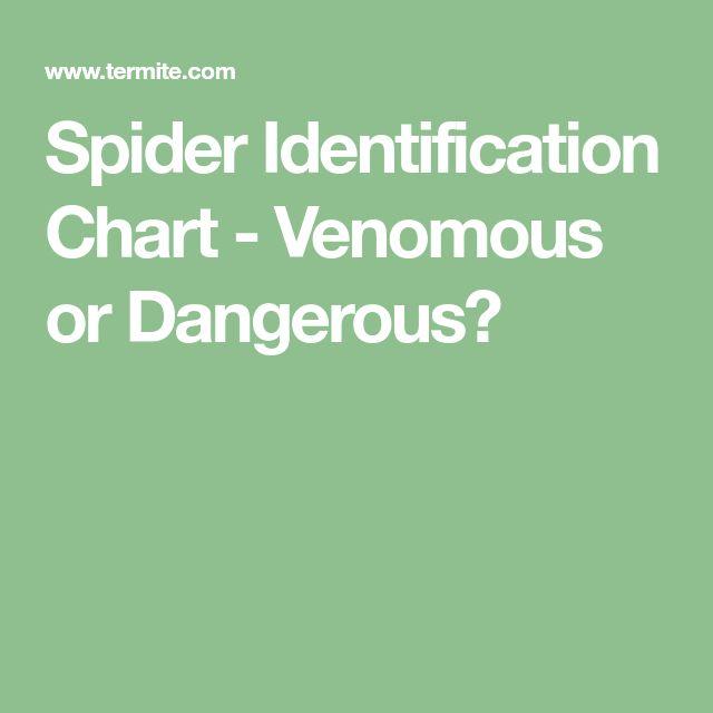 Spider Identification Chart - Venomous or Dangerous?