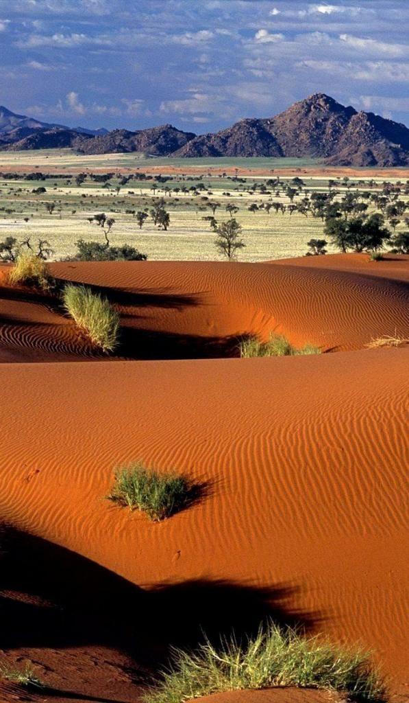 Tok Tokkie, désert du Namib - Namibie