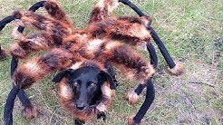 Mutant Giant Spider Dog (SA Wardega) - YouTube