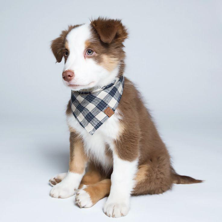 Bandana Check Dark Blue Beige Dog Christmas Outfits Amazon