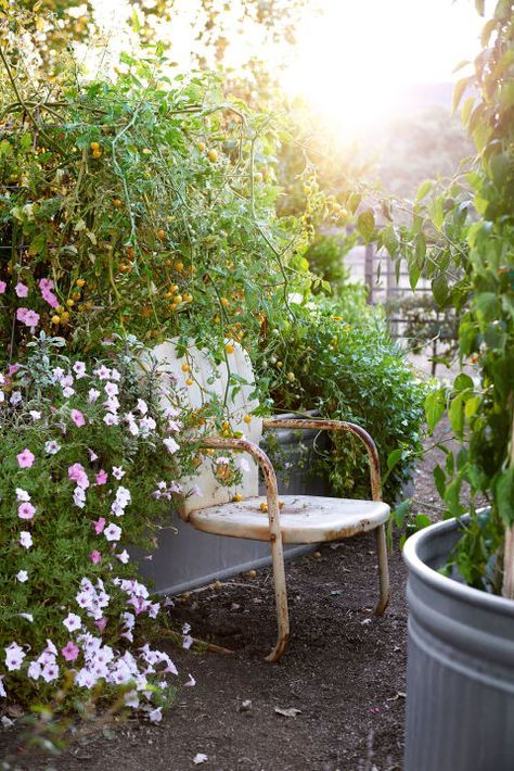 Resting Place:  Portulaca, variegated sage, cherry tomatoes, Padron peppers, parsley, and more thrive in galvanized troughs in the backyard of this California home.