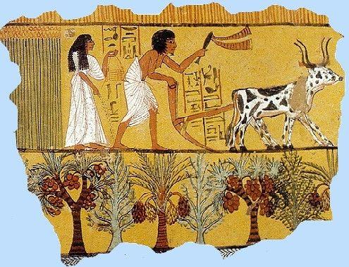 http://www.chiddingstone.kent.sch.uk/homework/egypt/images/harvest.jpg