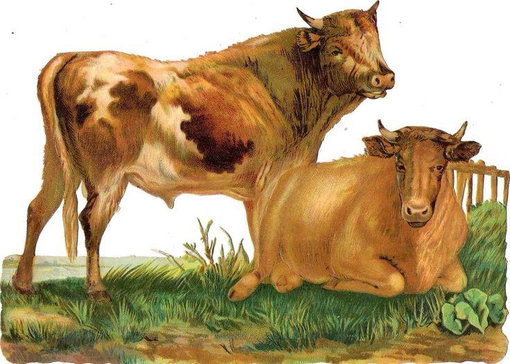Oblaten Glanzbild scrap die cut chromo Kuh cow XL 23,7 cm gras bull  Zaun fence