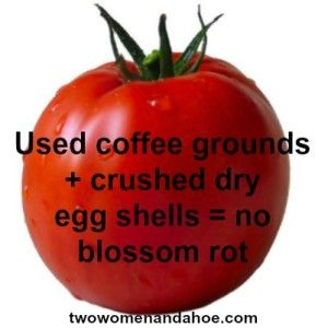 Organic Gardening: Coffee Grounds + Egg Shells = No Blossom Rot Just sprinkle into the soil when you plant your seeds