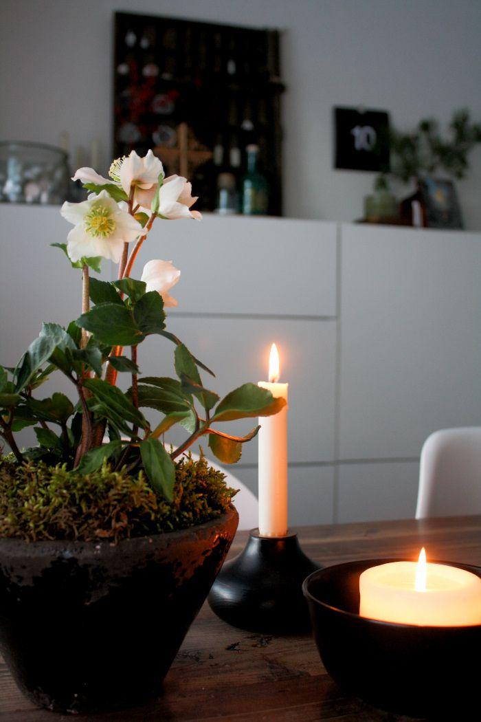 Puolitoista kerrosta kotia: Jouluruusu