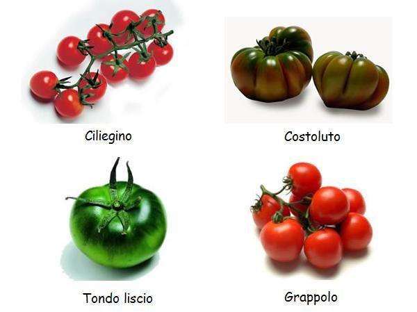 italian species tomatoes