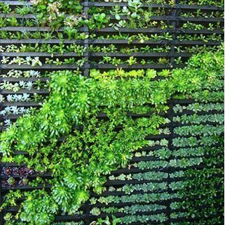 This is a great example of a living wall and its construction. A living wall will be integrated similarly with Maison Reciprocity to help regulate temperatures and reduce heating and cooling costs by serving as insulation for the house. Besides these sustainable functions, a green wall maintains a naturally beautiful aesthetic.