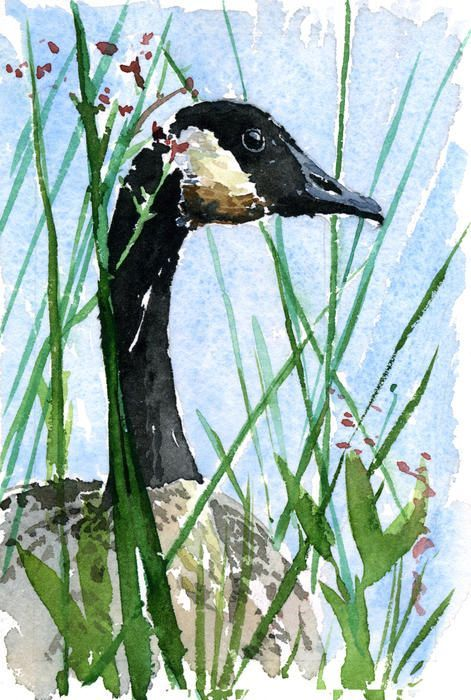 Canada Goose Looking Painting