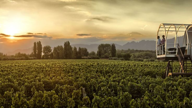 Happy Valentines! Who would you like to be with in this beautiful vineyard in Mendoza, Argentina? #vineyards #winelovers #wines #gourmet #experiences #honeymoon #honeymooners #valentinesday #love #beautifulplaces #beautiful #vines #places