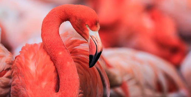Розовые фламинго по ошибке прилетели в Сибирь / Новости / Моя Планета