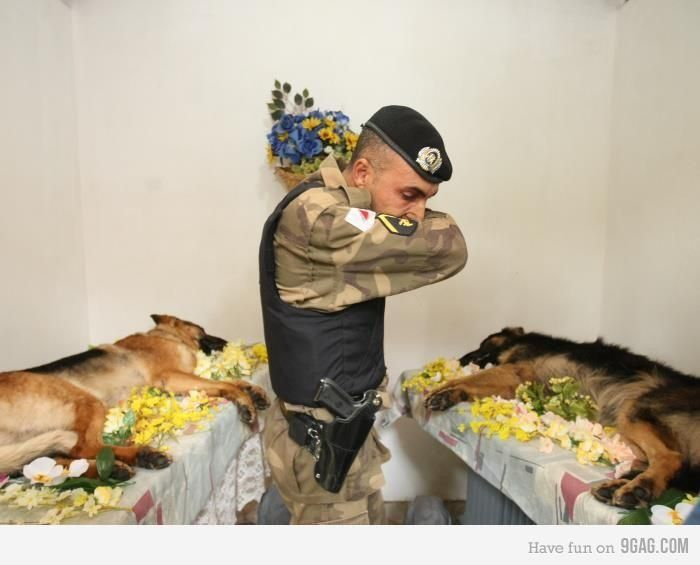 Many people remember a fallen soldier as a person in uniform. Sometimes that soldier is the four legged friend who saved your life by being a bomb-sniffing dog and finding the IED and warns you about it before it explodes. This is a sad but beautiful picture of pure respect for 2 fallen heroes. );
