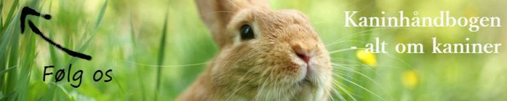 Huskaniner - kaniner som kæledyr - Kaninhåndbogen