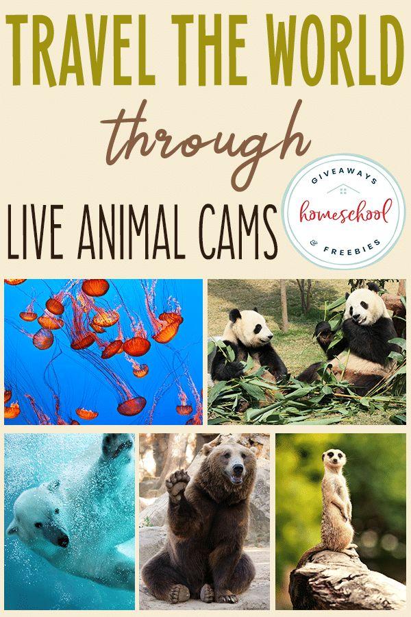 Travel the World through LIVE Animal Cams