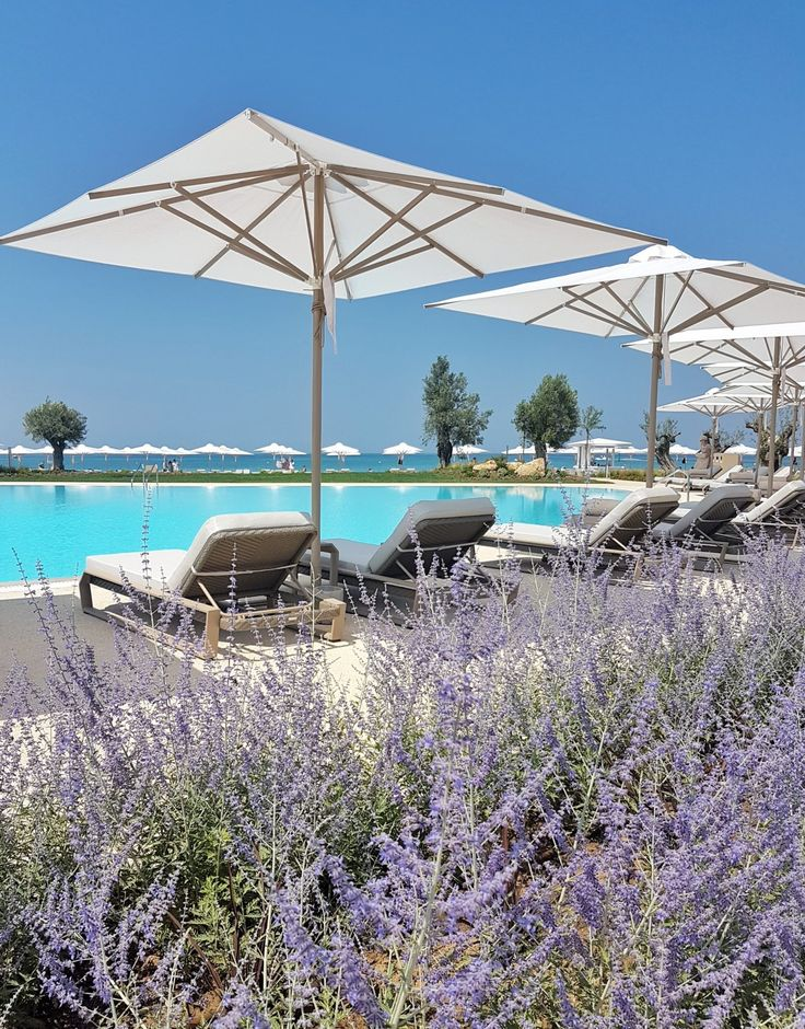 Lavenders by the pool