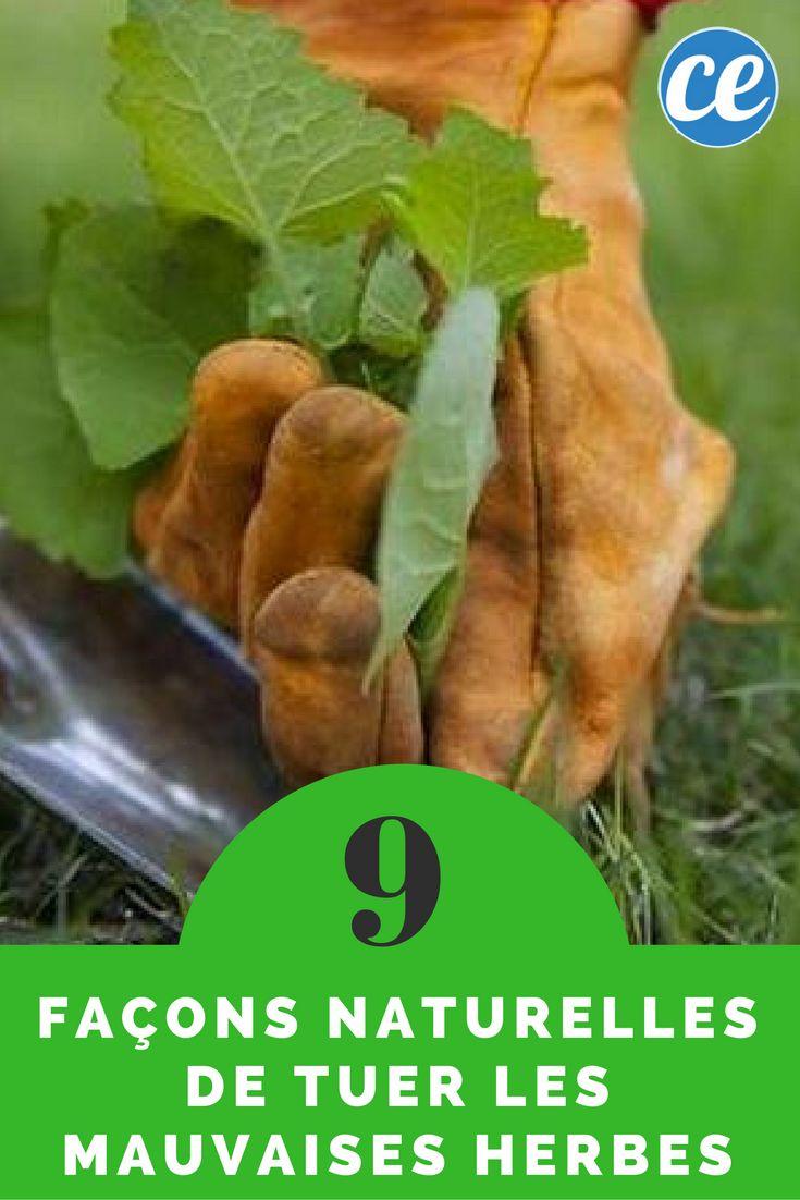 393 best plantes et jardinage images on pinterest vegetable garden landscaping ideas and - Tuer les mauvaises herbes javel ...
