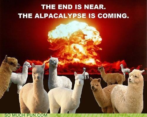 Myan 2012 and the alpacalypse...oh my! HAHAHA