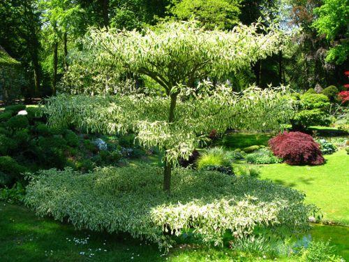 73 best jardin images on Pinterest Garden path, Scenery and Walkways