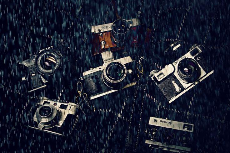 写真:雨も滴る いい・・(フリー投稿)