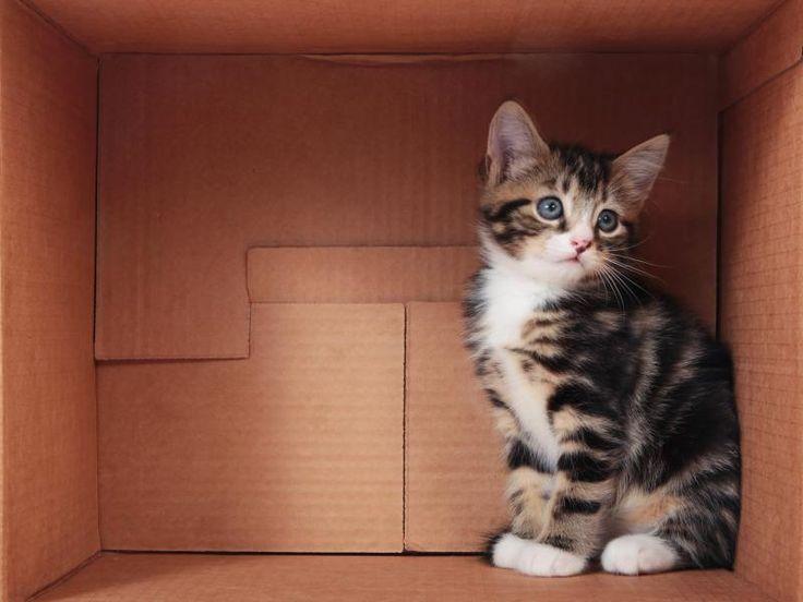 Comment bien gérer un déménagement avec un chat ?