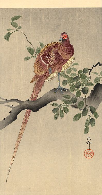 Swallows with cherry blossom - Ohara Koson - WikiArt.org