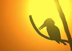 WWF España - WWF considera las renovables una oportunidad para salir de la crisis