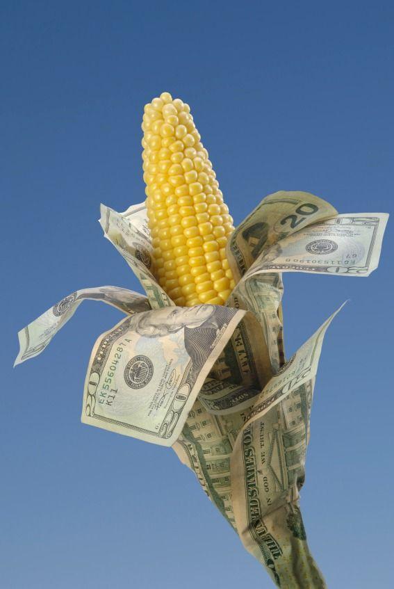 17 Best images about Cash crops on Pinterest | Vineyard, Pumpkins and Olive tree