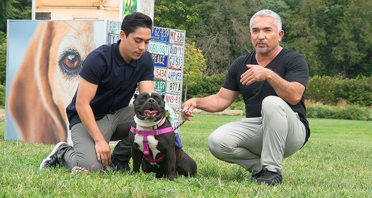 """Cesar Millan with his son Andre Millan in St. Louis Hope you're doing well..From your friends at phoenix dog in home dog training""""k9katelynn"""" see more about Scottsdale dog training at k9katelynn.com! Pinterest with over 22,200 followers! Google plus with over 535,000 views! You tube with over 600 videos and 60,000 views!! LinkedIn over 12,300 associates! Proudly Serving the valley for 12 plus years! now on instant gram! K9katelynn"""