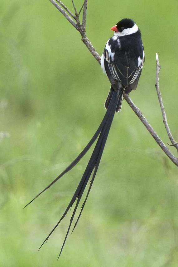 84 best Birds & Creatures in my Garden, KwaZulu Natal ...