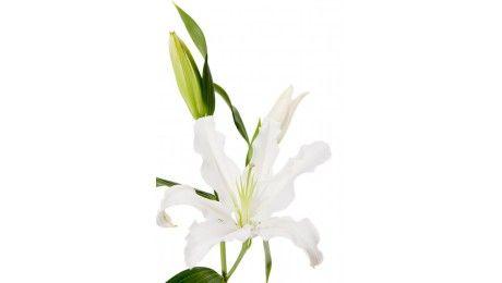 #Lys oriental blanc #Francefleurs #fleurs #mariage #wedding #deco #bouquet
