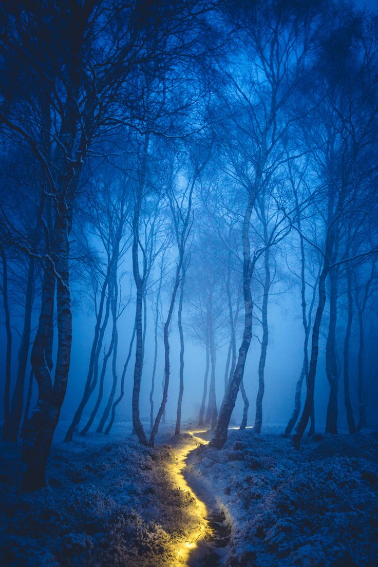 If you ever get lost in the winter realm you can follow the lighted paths to go to a Fairy village. They are very sweet and know the forest like the back of their hand