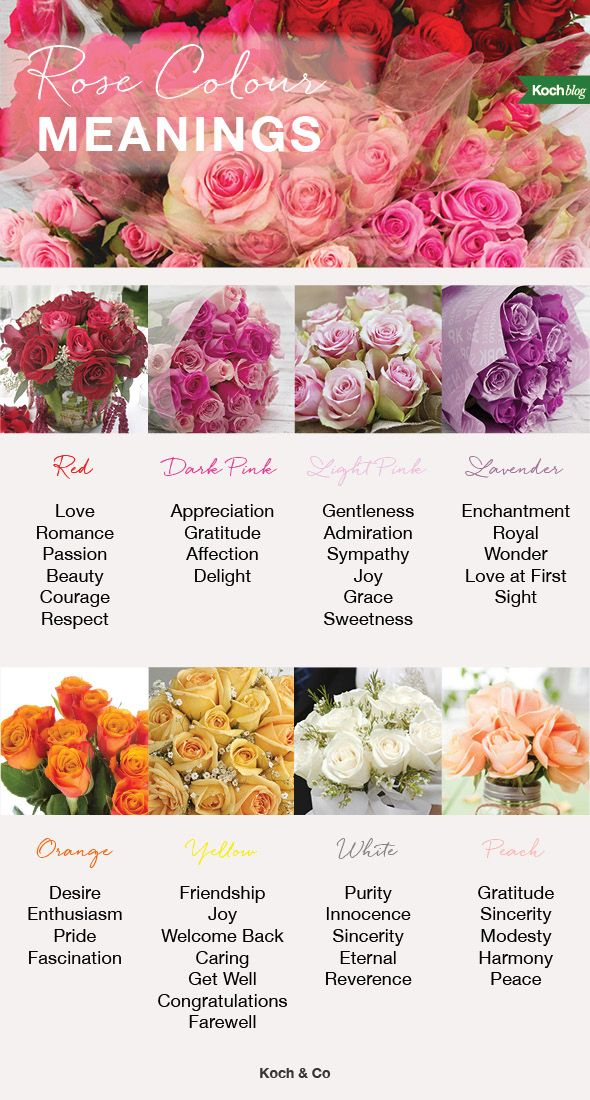 rose colour meanings the koch blog rose color flowers