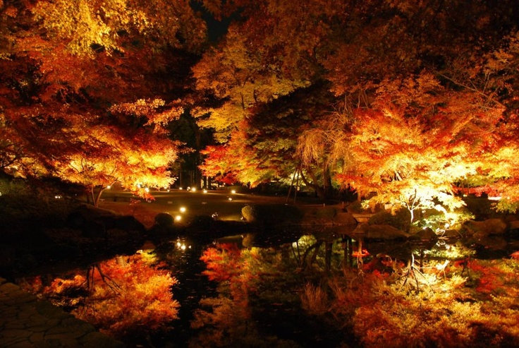 you-should-get-away-nature-6: Fall Beautiful, Nightlight, Autumn Night, Night Lights, Inspiration Pictures, Night Time, Photography Blog, Memorial Mornings, Fall Wedding