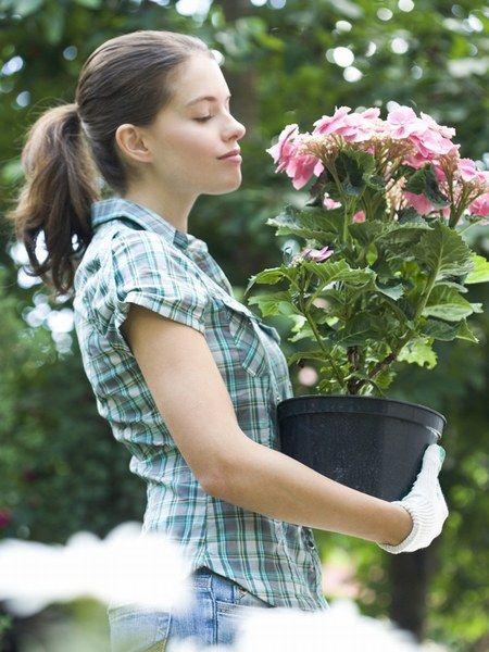 Purifier l'air de votre intérieur grâce aux plantes vertes dépolluantes (2-3 plantes pour une pièce de 17 à 20 m). La n°1 est le chlorophytum : elle ne fera qu'une bouchée du formaldéhyde, monoxyde de carbone, benzène, trichloréthylène. Excellents aussi le palmier raphis ou nain, les ficus benjamina ou robusta, les dragonniers, l'arbre de la félicité et les fougères. Plantes fleuris : le spathiphyllum ou lys de la paix, les chrysanthèmes et les gerberas…