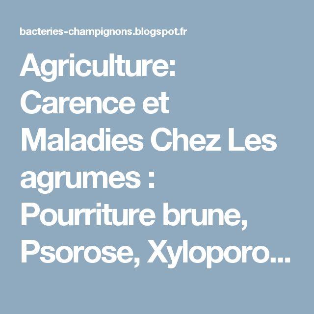 Agriculture: Carence et Maladies Chez Les agrumes : Pourriture brune, Psorose, Xyloporose
