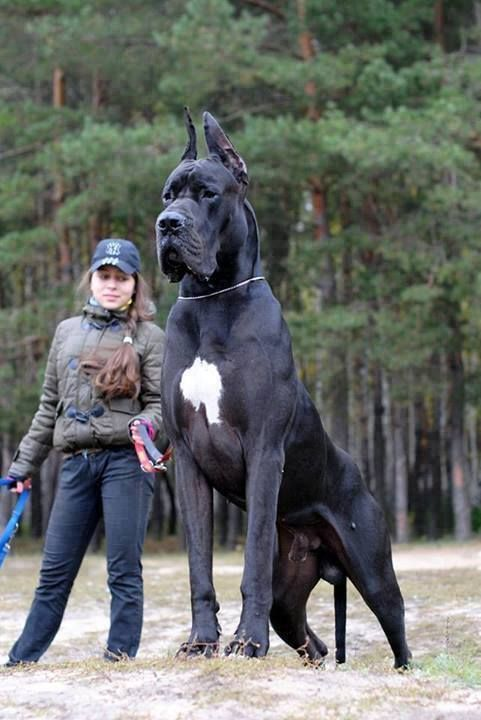 Oh man! It's such a big dog!