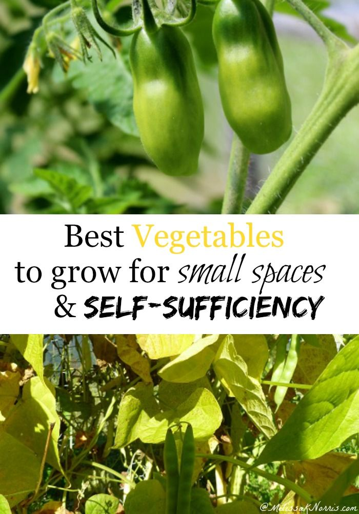 Want to grow a garden but have limited space? These are the very best vegetables pick to plant if you have limited space but still want to aim for self-sufficiency with your gardening efforts. She grows enough of these to last all year and never buys them from the store!