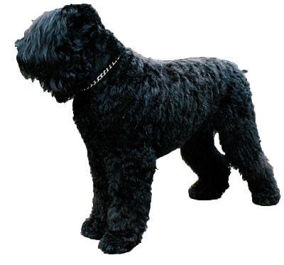 Should I Get A Big Dog Or Small Dog Quiz