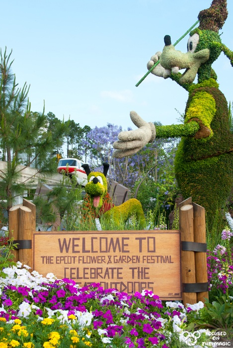 Goofy and Pluto - Epcot Flower festival Focused on the Magic.com article