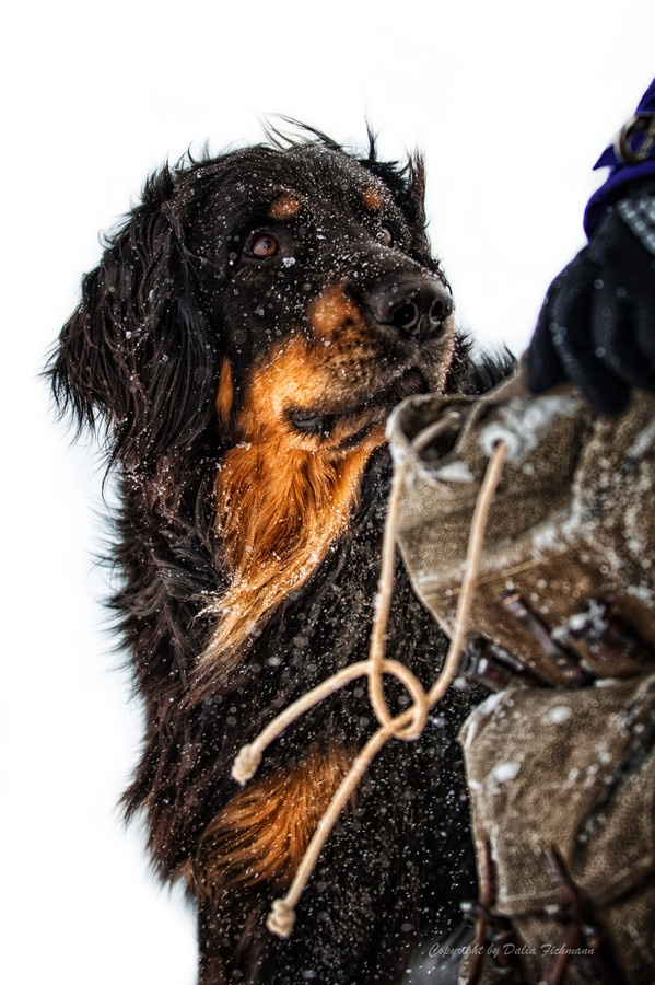 "500px / Photo ""Avalanche dog II"" by Dalia Fichmann"