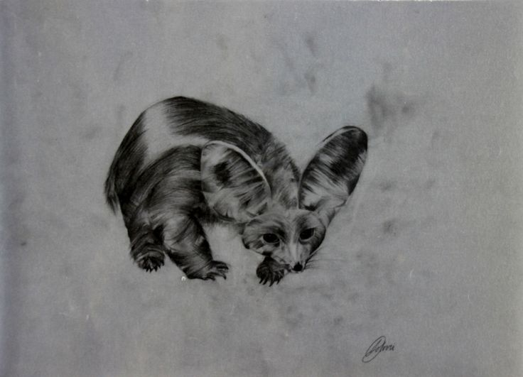 Creature of the Night by Donna Solovei  Medium: Pencil on tracing paper  Dimensions:32 x 23 cm (L x W)