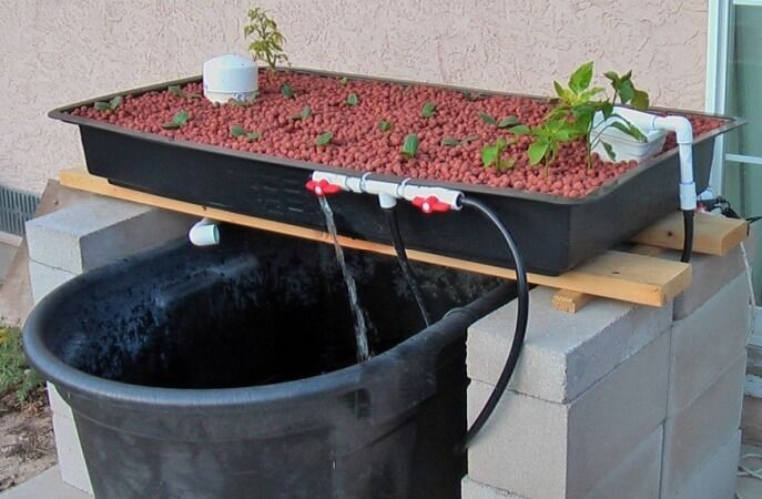 Simple aquaponics projects for beginners (or anyone). Get a quick crash course in Aquaponics 101 and DIY tutorials for backyard projects. Aquaponics are