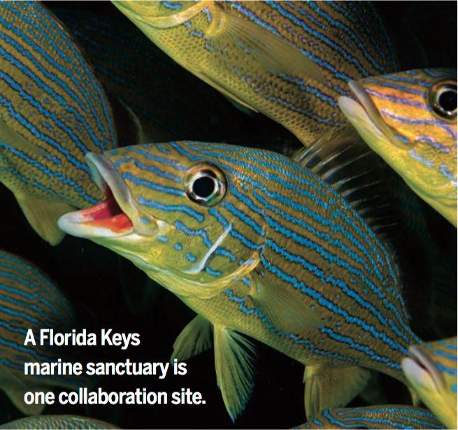 HabanaEquipo conjunto U.S., Cuba protege los maresDos agencias de Estados Unidos y el Ministerio de Ciencia de Cuba acordaron trabajar juntos esta semana para manejar y estudiar las áreas marinas protegidas. El nuevo memorando de entendimiento, ha sido firmado por la Administración Oceánica y Atmosférica Nacional (NOAA) y el Servicio Nacional de Parques, cubre los del jardín de flores bancos de Estados Unidos y Cayos de Florida santuarios marinos y dos parques nacionales de EE.UU., así como…