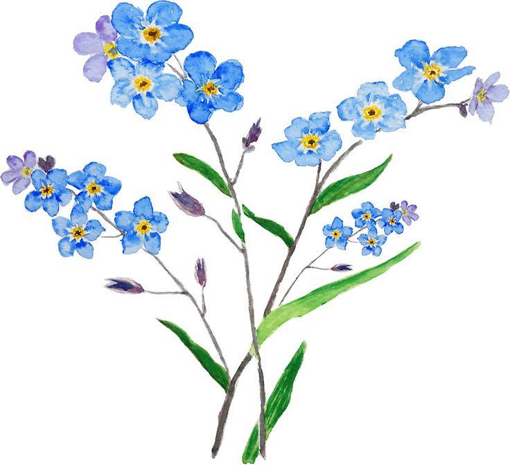 Картинки незабудки цветы нарисованные, фсб праздником