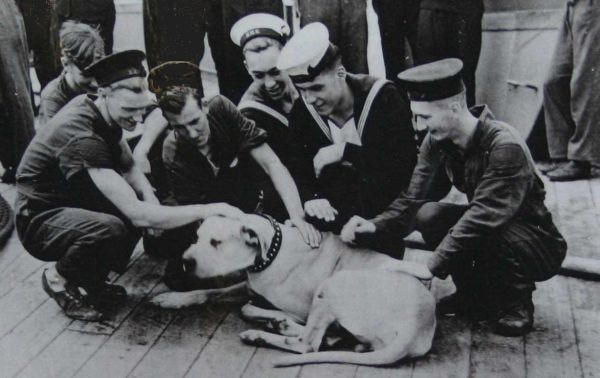 Just Nuisance - Able Seaman 'Just Nuisance' was the only dog ever to be officially enlisted in the Royal Navy. Ship's dogs had been used by the Navy for centuries but were never considered full members of the crew. Just Nuisance was a South African Great Dane who got his name as a pup by wagging his injured tail so enthusiastically that everyone was covered in blood spatters. He became the first and only canine member of the Royal Navy in history and was even promoted to Able Seaman.