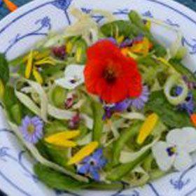foredrag om lægeplanter, snapseurter, krydderurter, ukrudt, blomster
