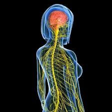 Nervous system capacities are unrivaled in the known universe.  Stretch toward your capacity.